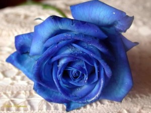 Egyedi kék rózsa